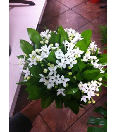 Elegant White Bouvardia Bouquet