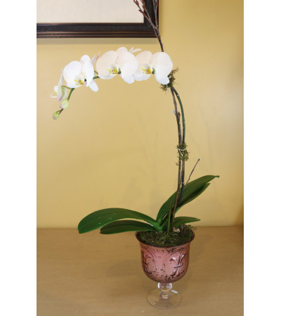 Orchid of Elegance