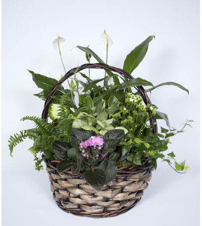 Glorious Plant Basket