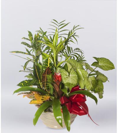 Indoor Plant Garden
