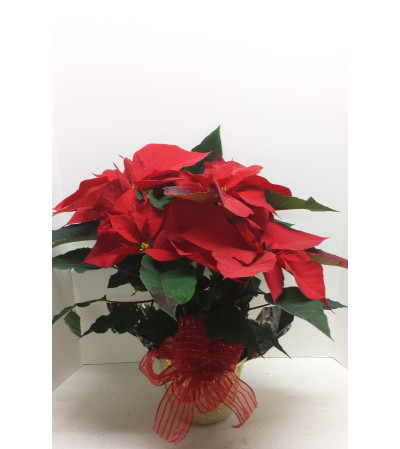 "6""Christmas Red Poinsettia with bow"