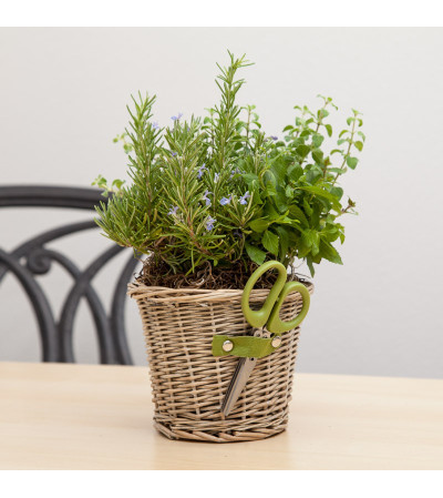 Mom's Herb Planter with Scissors