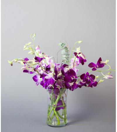 Purple Orchid Dream