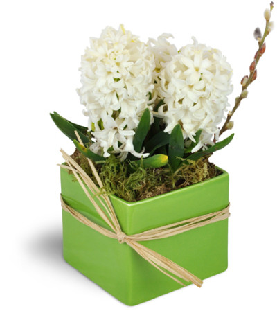 White Hyacinth Planter™