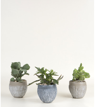 Set of 3 Succulent Plants