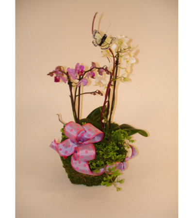 Mini Orchid Basket (Medium)