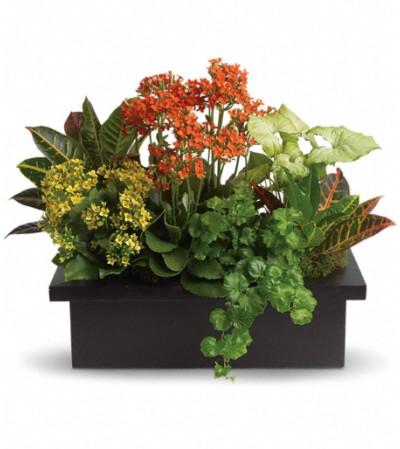 Stylish Plant Assortment