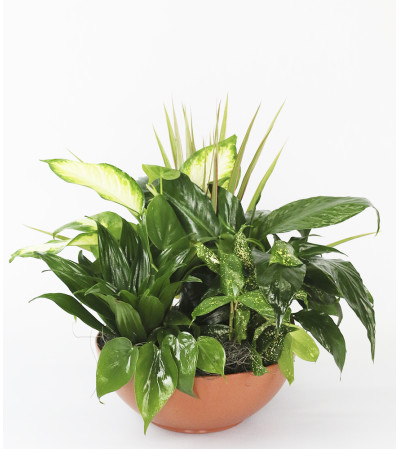 Lush Green Planter by DiBiaso's