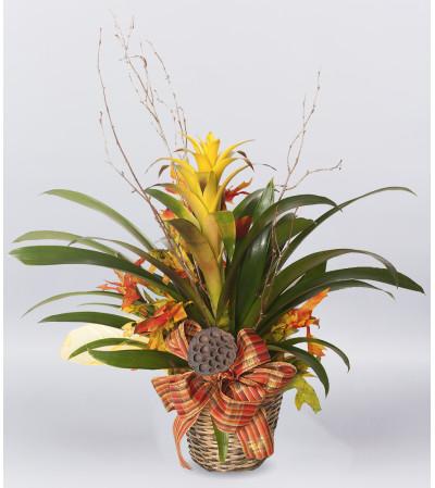 Autumn House Plant