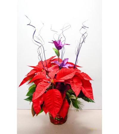 Red Poinsettia Basket