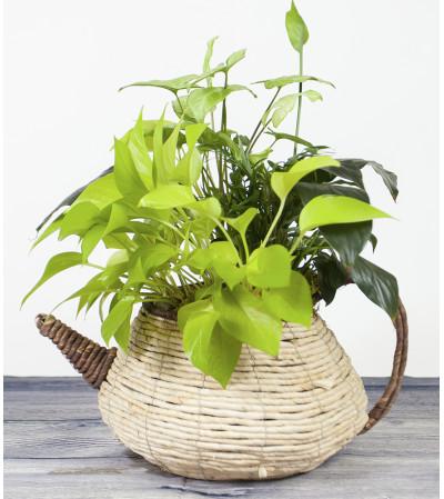 Teapot Basket