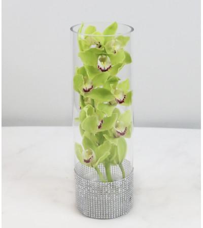 Romantic Orchid