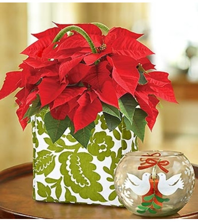 Poinsettia Tote with Votive