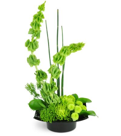 Emerald Zen