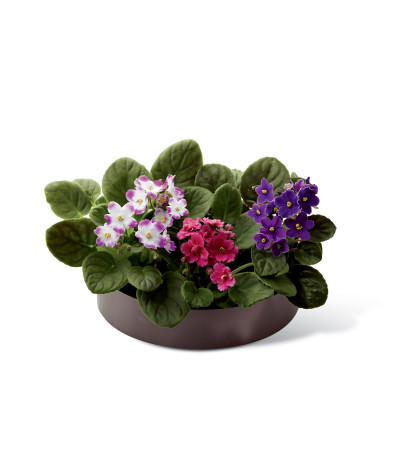 The FTD® African Violets