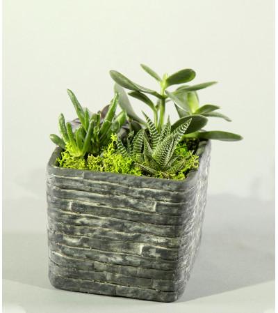Succulent Stone Garden