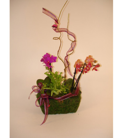 Mini Orchid Basket