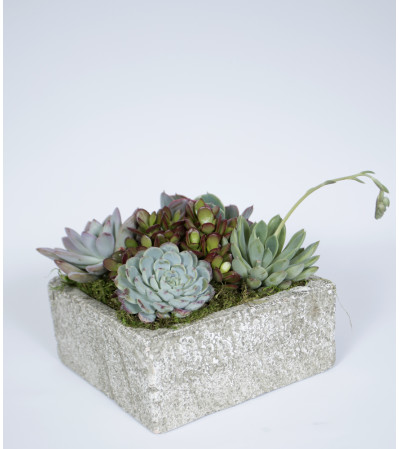 Decorative Succulent Garden