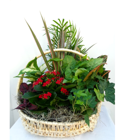 Classic Tropical Blooming Basket
