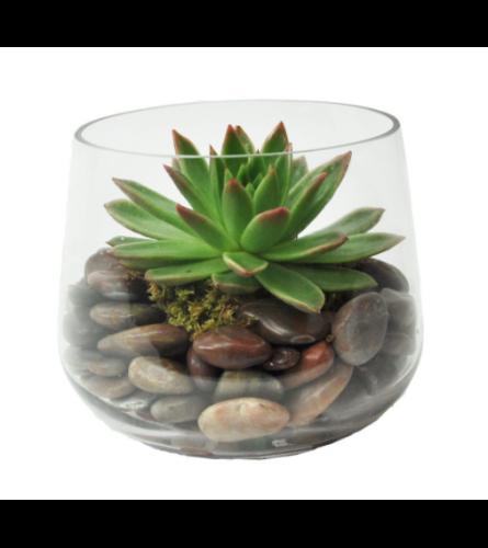 Modern Single Succulent
