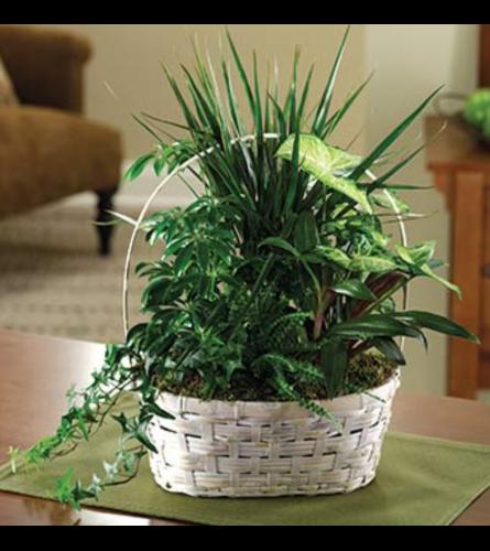 Peaceful Green Plant Basket