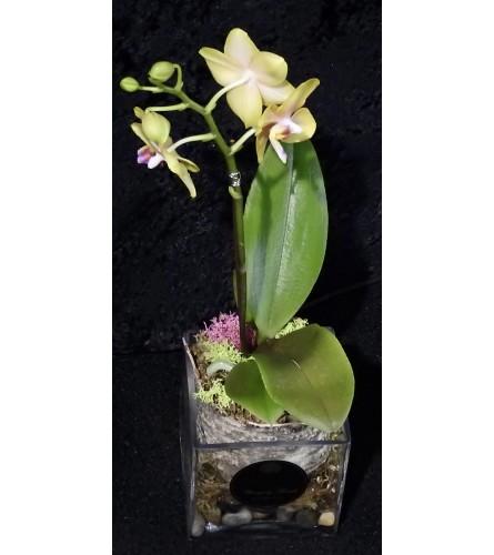 My Mini Orchid