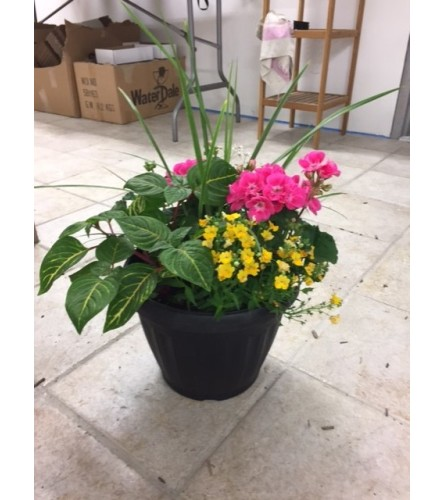English Outdoor garden pot