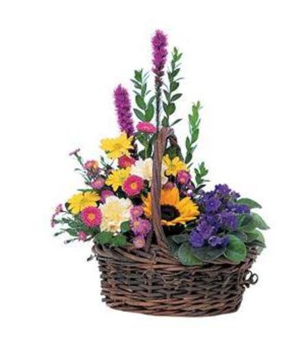 Petals and Plants Combo Basket