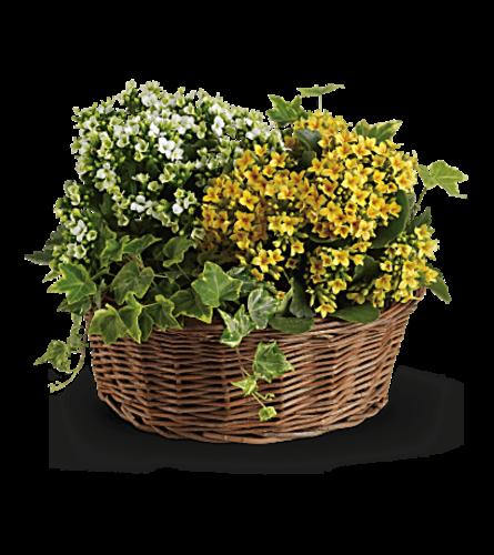 Basket of Living