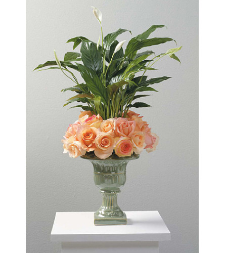 Peace Lily Plant SF96-21