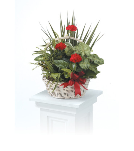 Dishgarden  Basket   CTT30-11