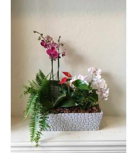 Parallel Orchid Garden