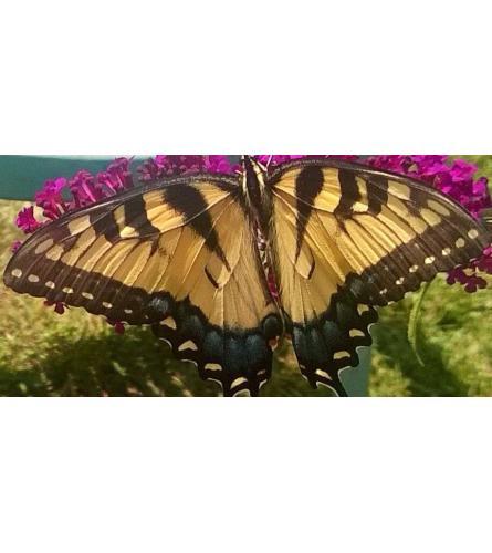 Butterfly Lovers Arrangement