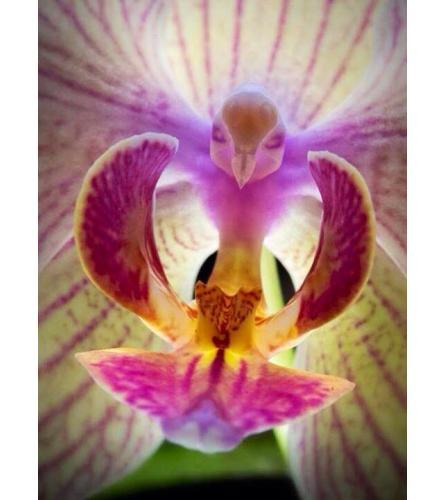 Custom Orchid Lovers Arrangement