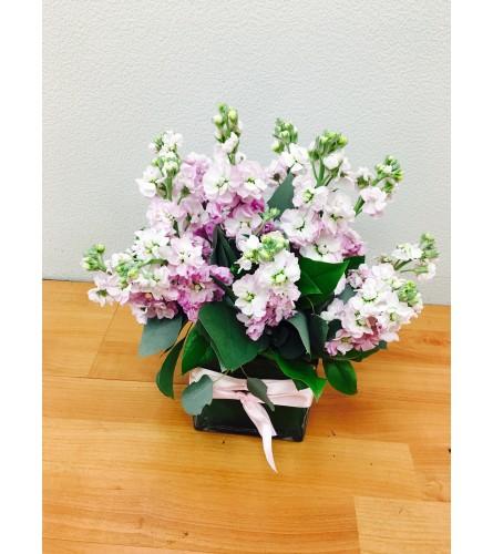 Scented Pink Stock Floral Arrangement