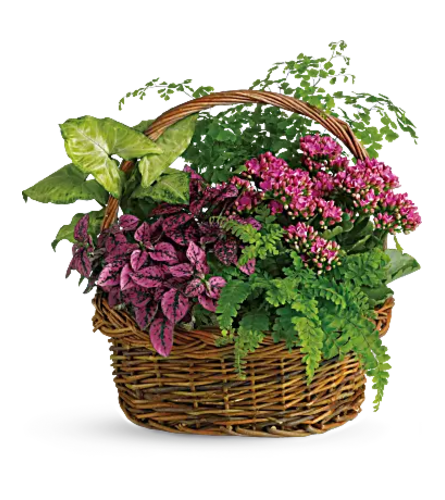 A walk in The Garden Plant Basket