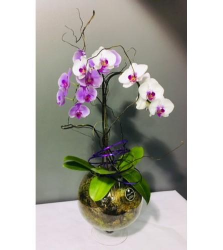 Orchid Wonderland