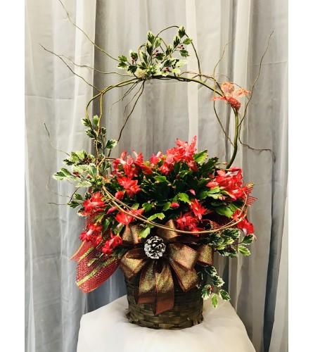 Ellington's Christmas Cactus - Colors Vary