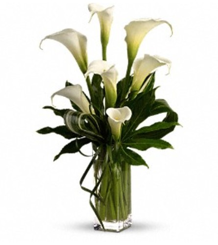 My Fair Lady by Teleflora - by Jennifer's Flowers