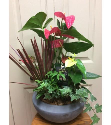 Lg antherium planter