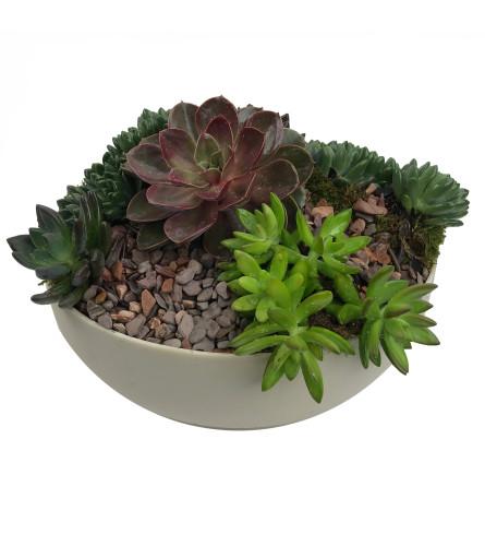 Natural Succulent Garden
