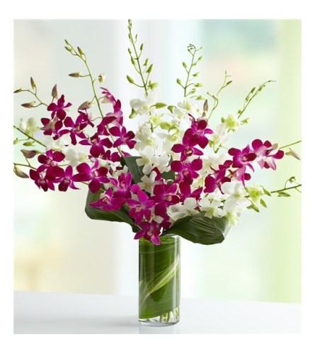 Orchids Embrace
