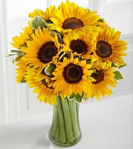Endless Summer Sunflowers