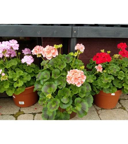 Annual patio pot