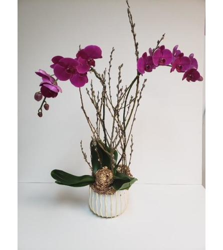 Purple Orchids and Branches