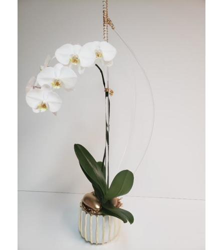White Orchid and Acrylic