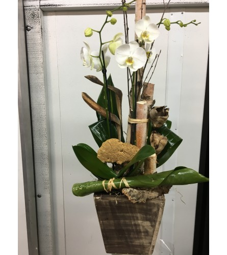 Breathtaking Orchid Planter.