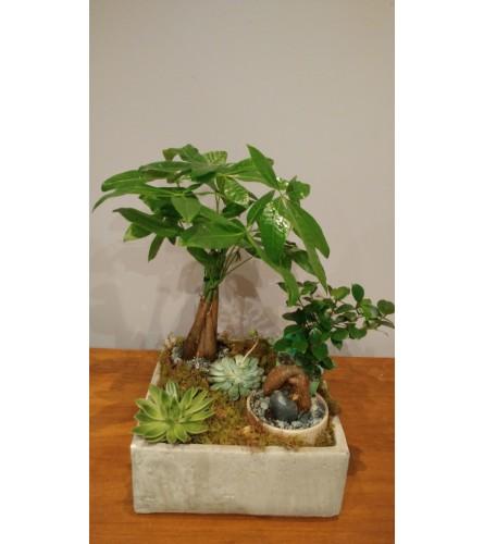 Money Tree/Succulent Garden