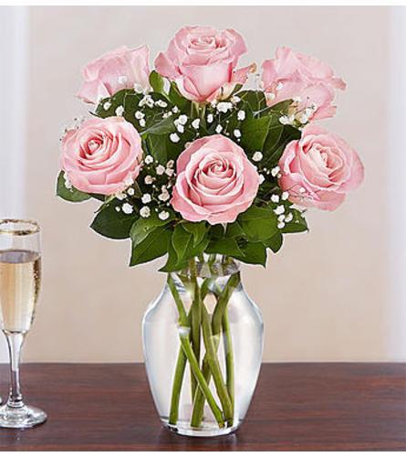 Pink Rose Six