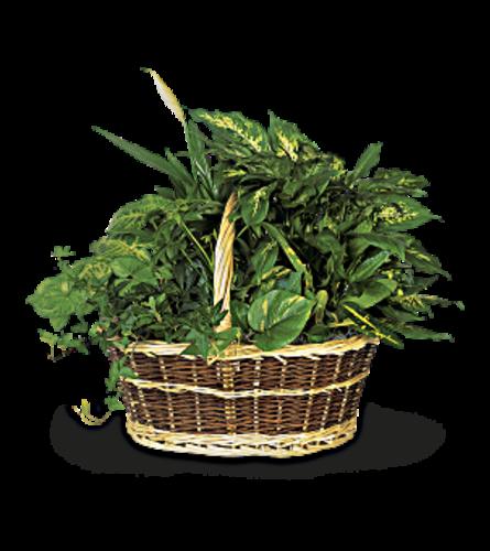 Large Garden Basket